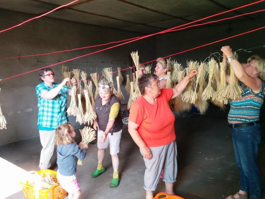 Getreideehren zum Trocknen