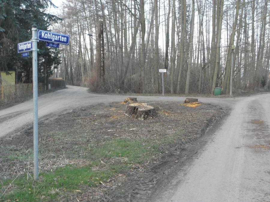 Fäll- und Rodungsarbeiten Kohlgarten 2