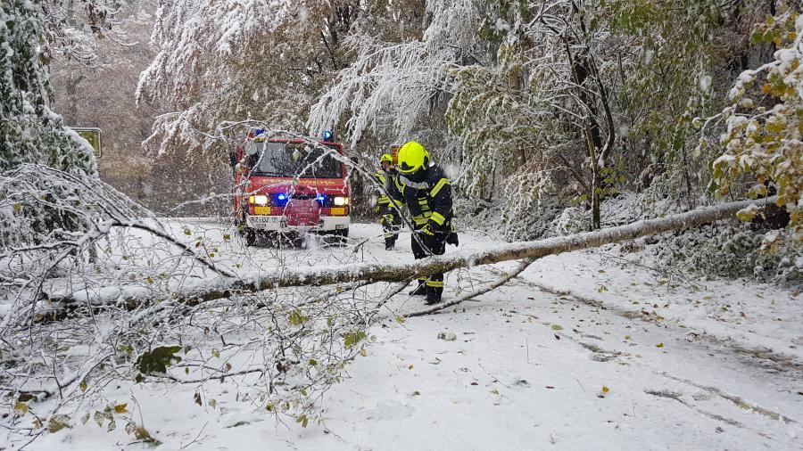 2016-11-08 Schnee - Bäume 2