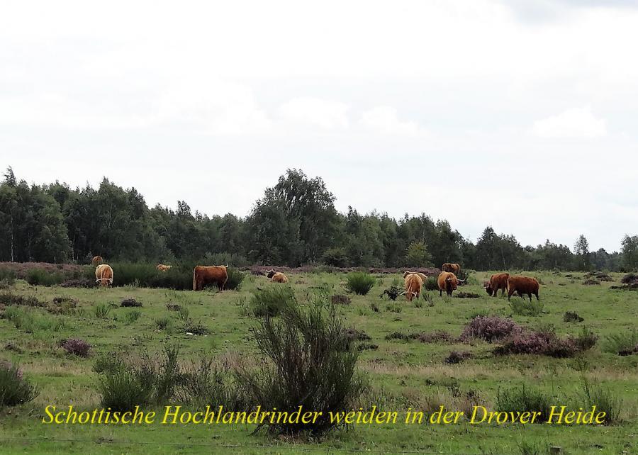 Droverh 04