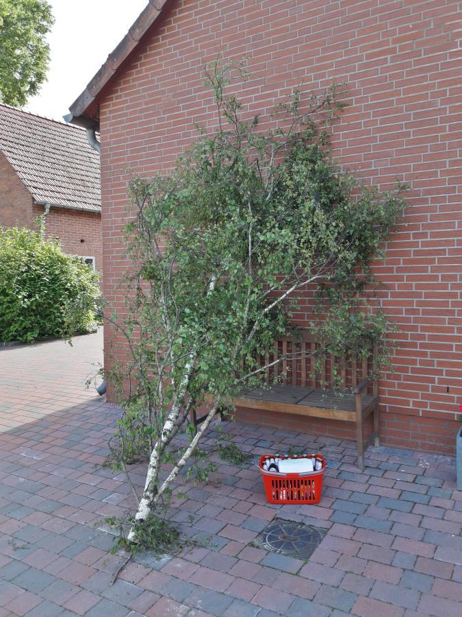 """Exemplar eines solchen Pfingstbaumes (inkl. der nötigen Versorgung zum """"Begießen"""")"""