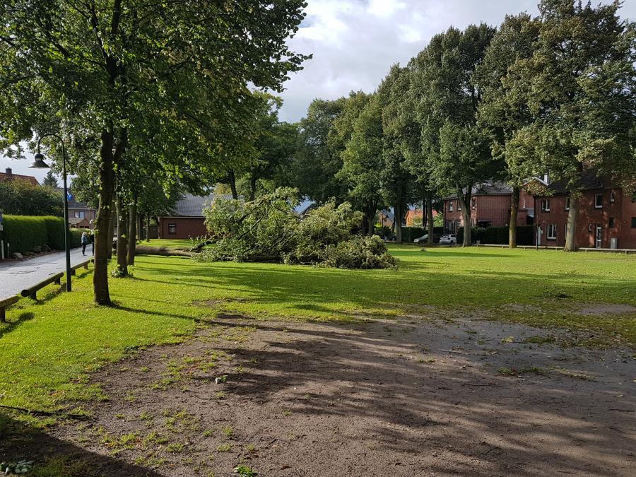 Baum am Dorfplatz
