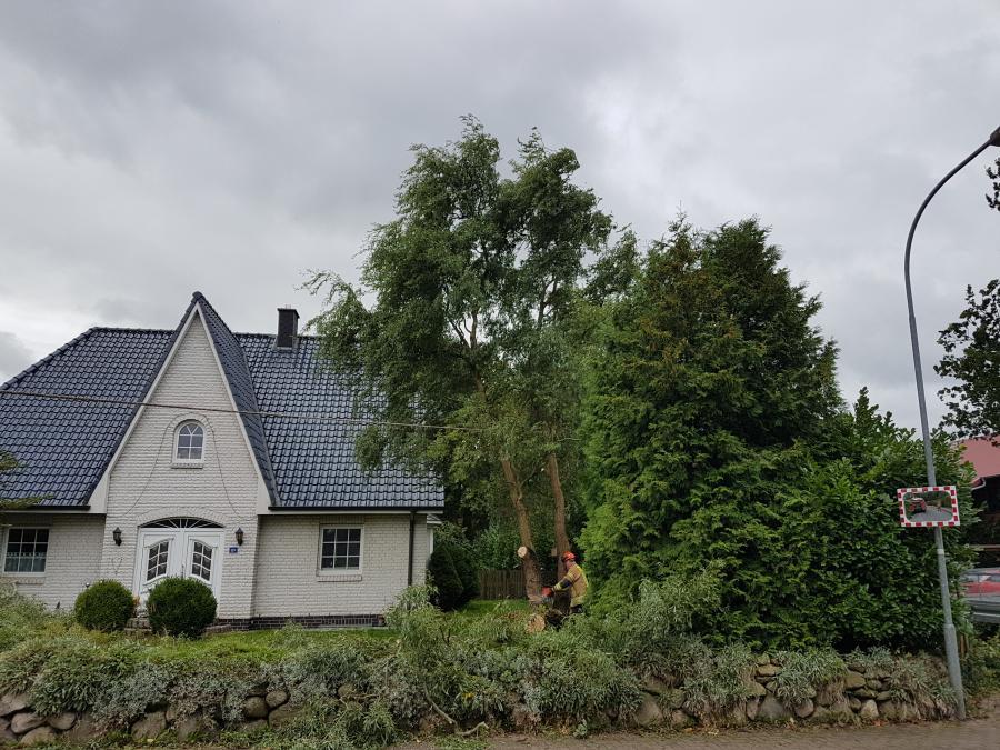 Baum an der Hauptstraße