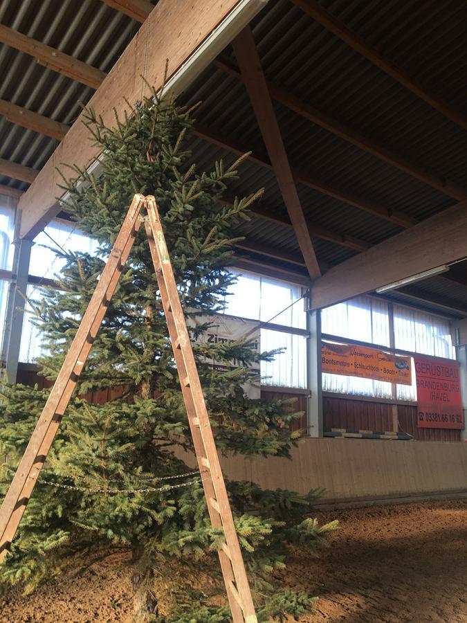 Großer Weihnachtsbaum ohne Schmuck