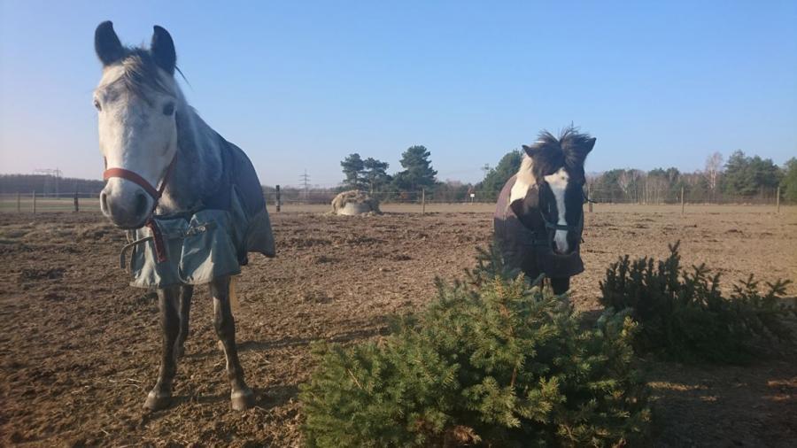 Ponys Weihnachtsbaum