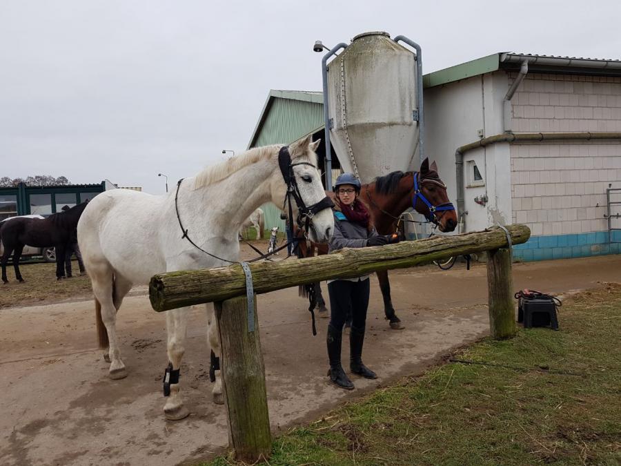 Pause für die Pferde