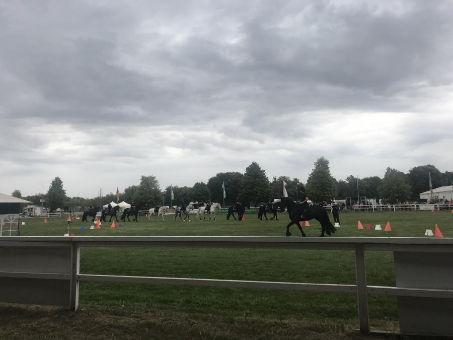 Pferdesommer Ostseequadrille