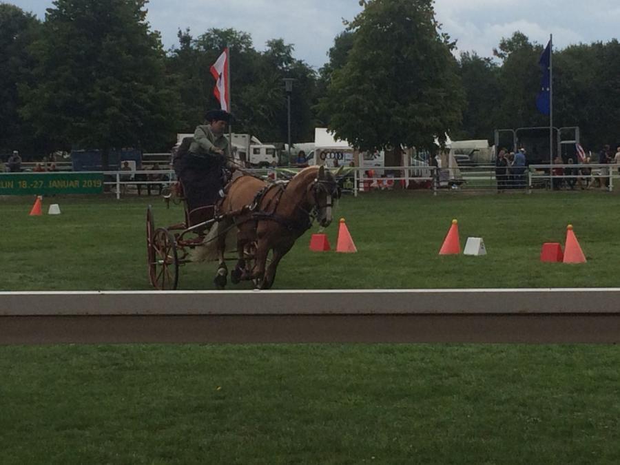 Pferdesommer Hindernissfahren