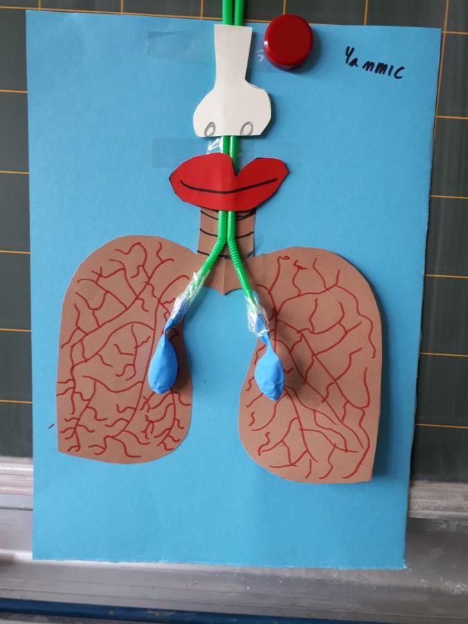 Lunge1