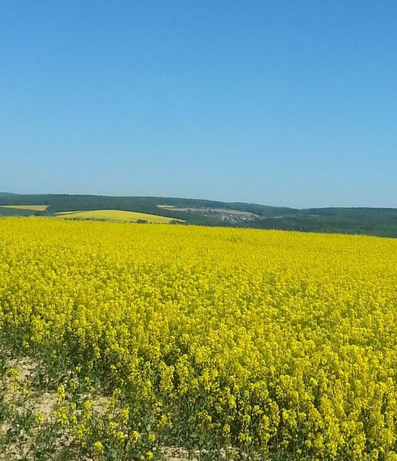 """""""Maigelber"""" Blick ins Blaue Ländchen vom Loreley-Aar Radweg; am Horizont umrahmt von Wäldern die Taunusgemeinde Bettendorf"""