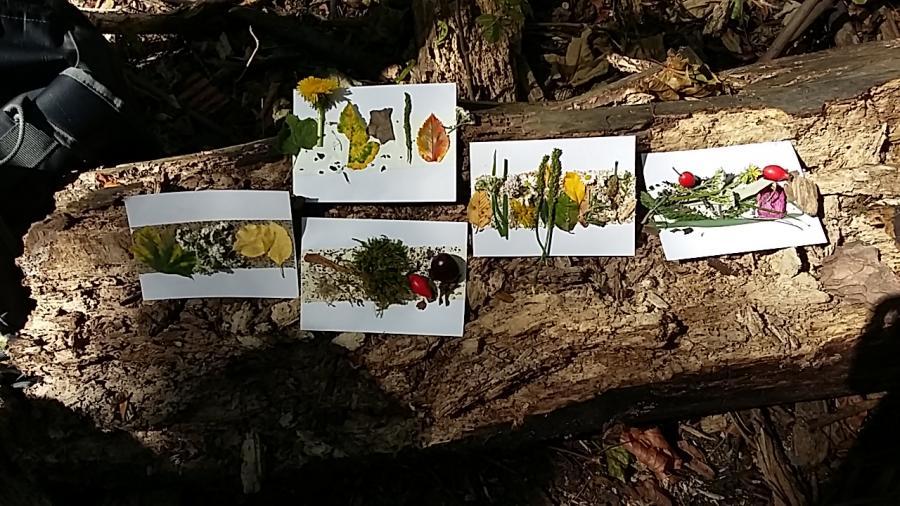 Kunst aus dem Wald - Natur- und Wald-AG