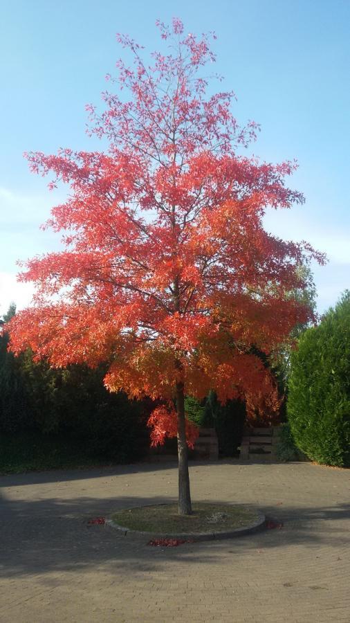 Herbst in Langeln