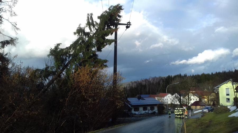 Baum in Stromleitung Sommersberg 1