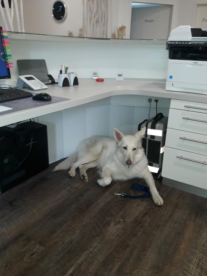 Gasthund Leila