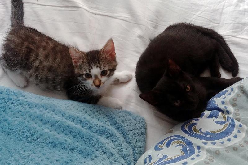 Tabsi & Mia