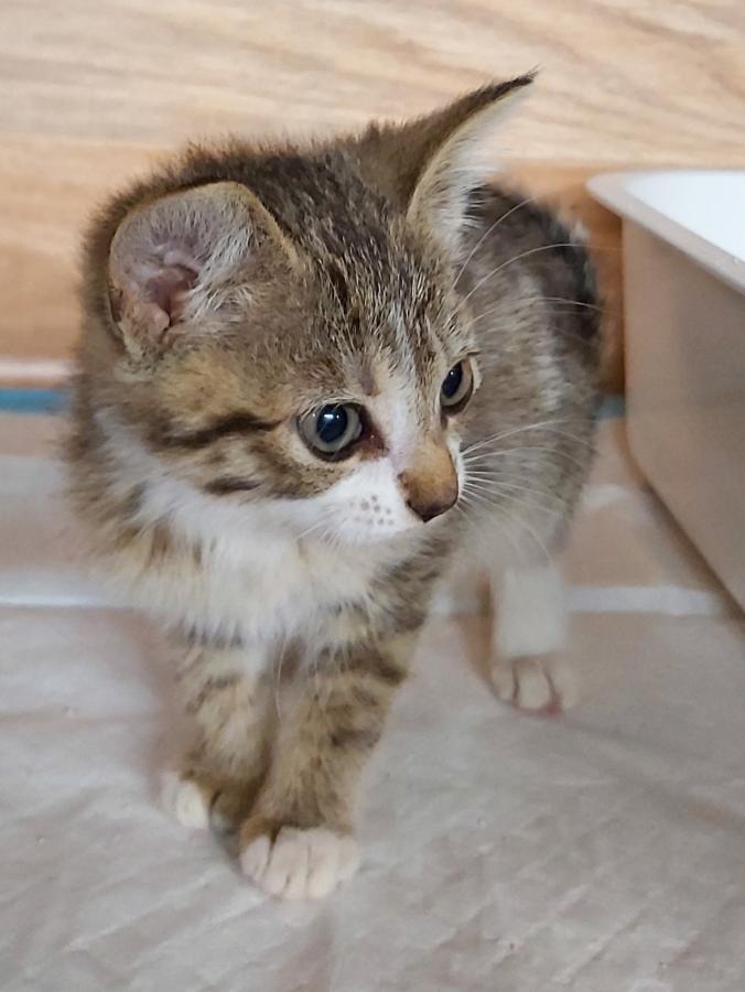 Katzenmädchen1