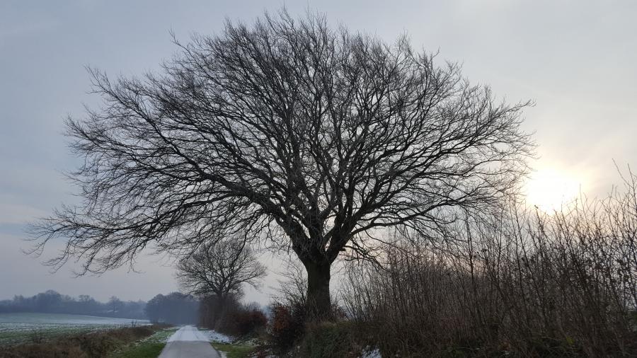 2019_01_22_001 Winterbuche Grüner Weg nahe Sieverstedt