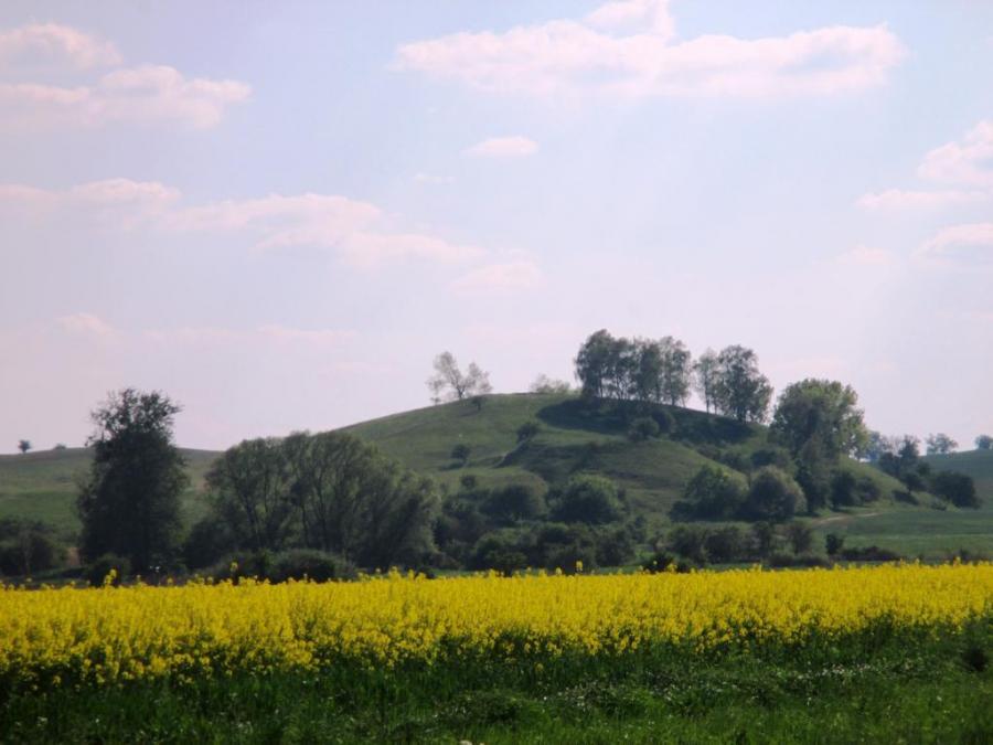 Rapsfeld