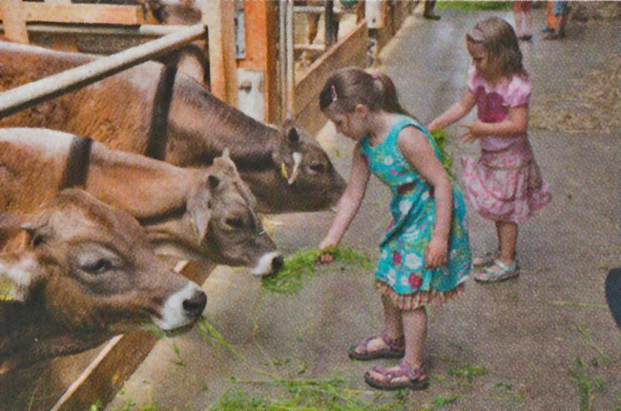 Kinder mit Kühen