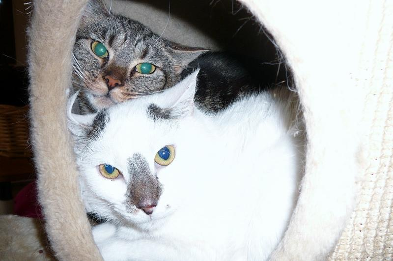 Raja & Flecky