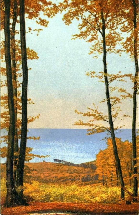 Blick auf Wald und See - Stubnitz