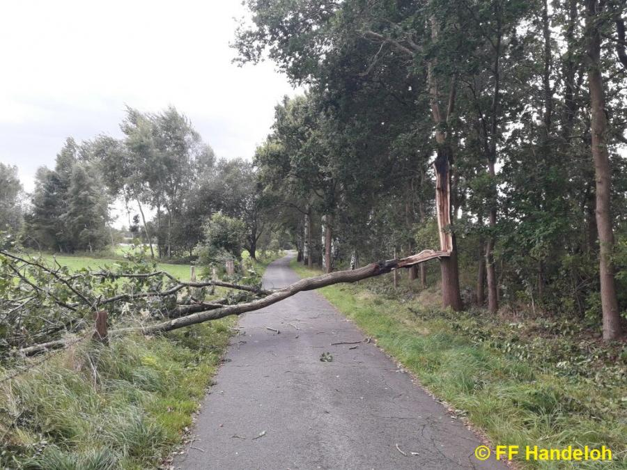 TH1 - Baum auf Straße, Hubertusweg