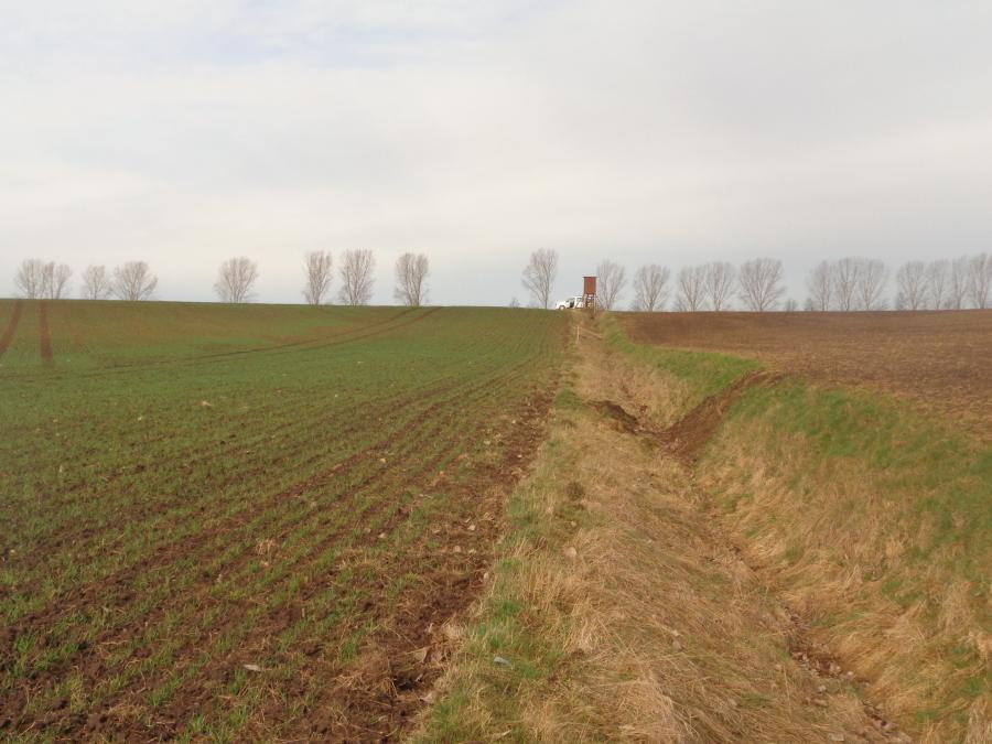 Baumpflanzung_Hammerstedt