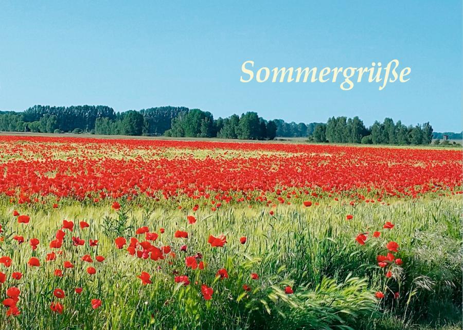 Sommergrüße aus Lütte