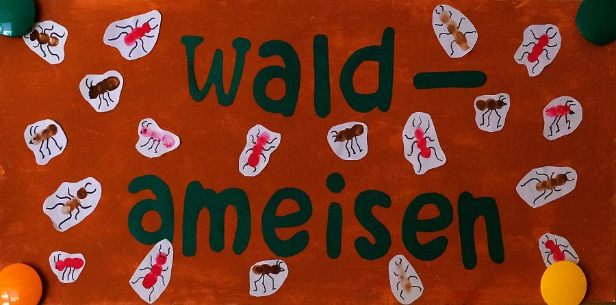 Gruppenbild Waldameisen
