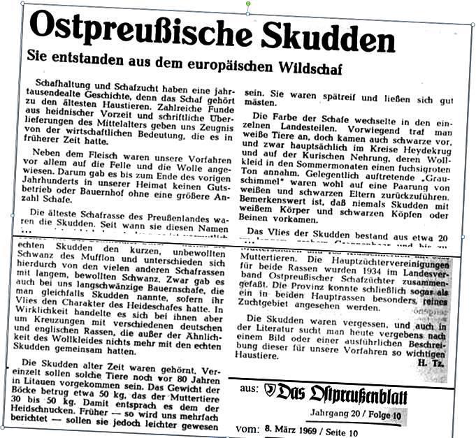 Ostpreußische Skudden