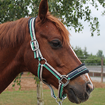 Pferde 212x212