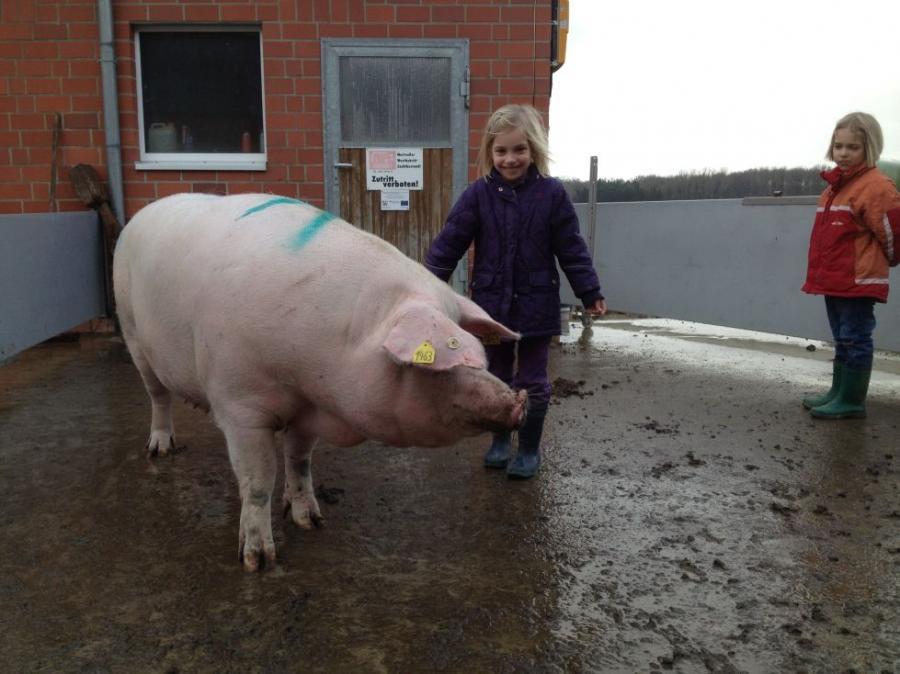 Wie groß werden Schweine Kostenloser lesbischer Analsex