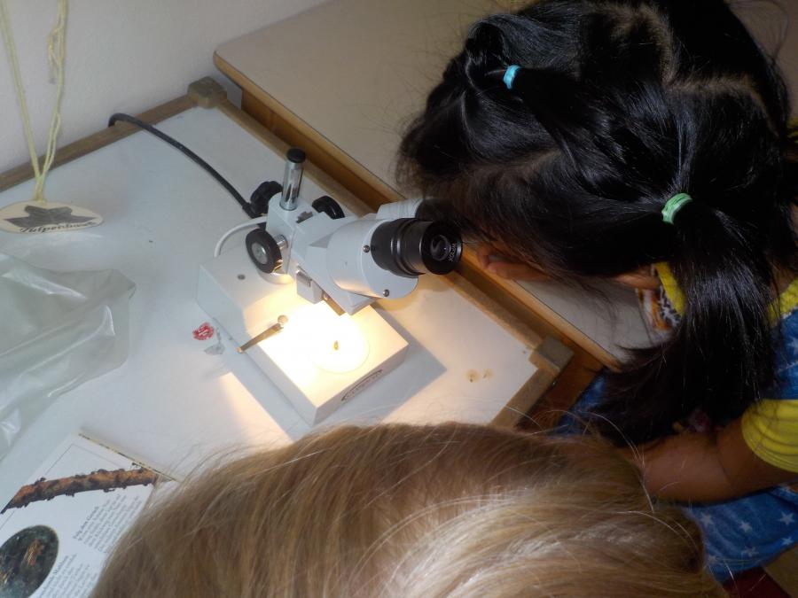 beobachten mit dem Mikroskop
