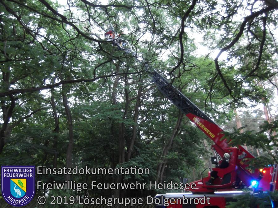 Einsatz 65/2019 | Baumkrone droht auf Straße zu stürzen | Dolgenbrodt Blossiner Straße | 12.06.2019