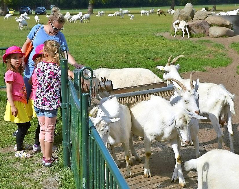 """Ziegenstreicheln war für die kleinen Besucher auf dem Ziegenhof """"Zwölf Eichen"""" in Gulben im Rahmen der Brandenburger Landpartie am Wochenende der Renner."""