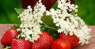 ERdbeer-Holunderblüte