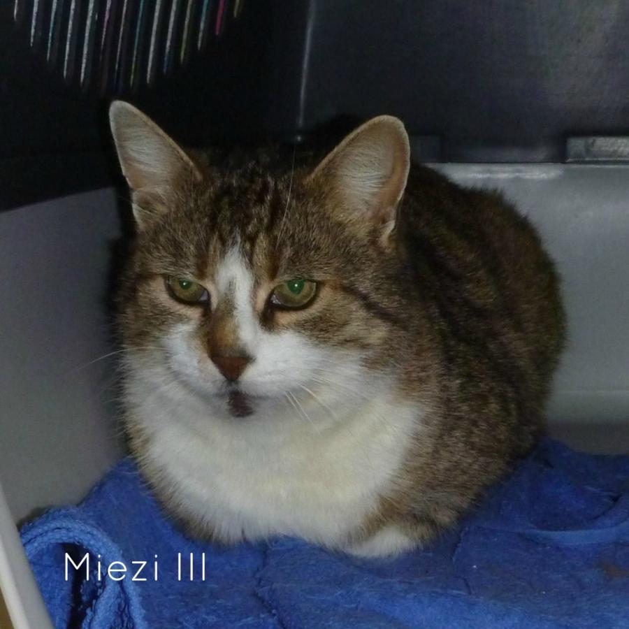 Miezi III
