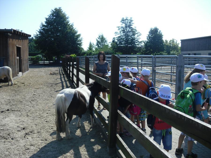 Abenteuer auf der Reinart Ranch