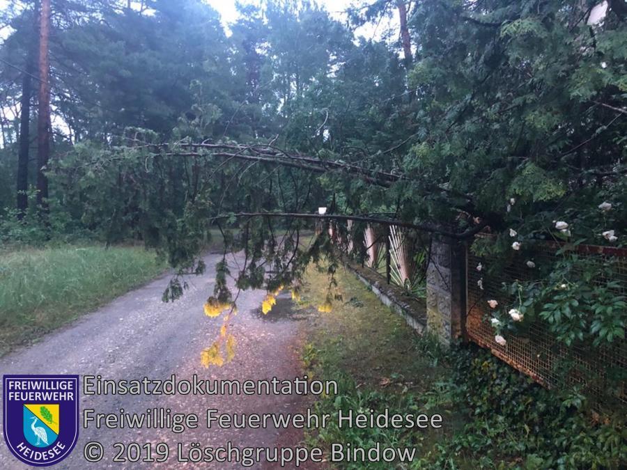 Einsatz 56/2019 | Baum über Straße | Bindow Südkorso | 06.06.2019