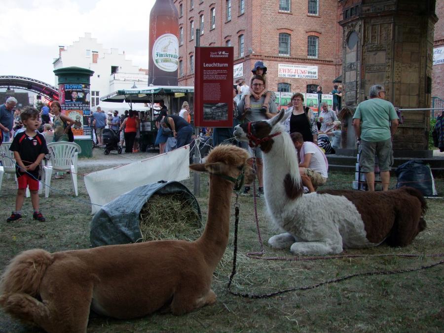 Stadtfest (5)