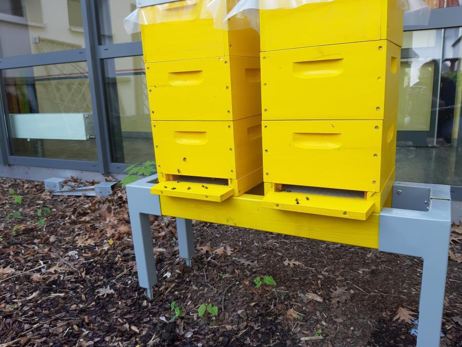 Bienen-AG 1