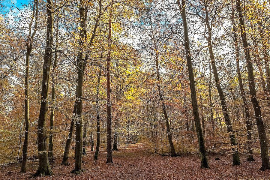 Natur_Foto: Puhlmann