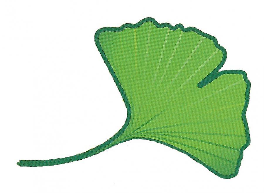 Ginkgoblatt