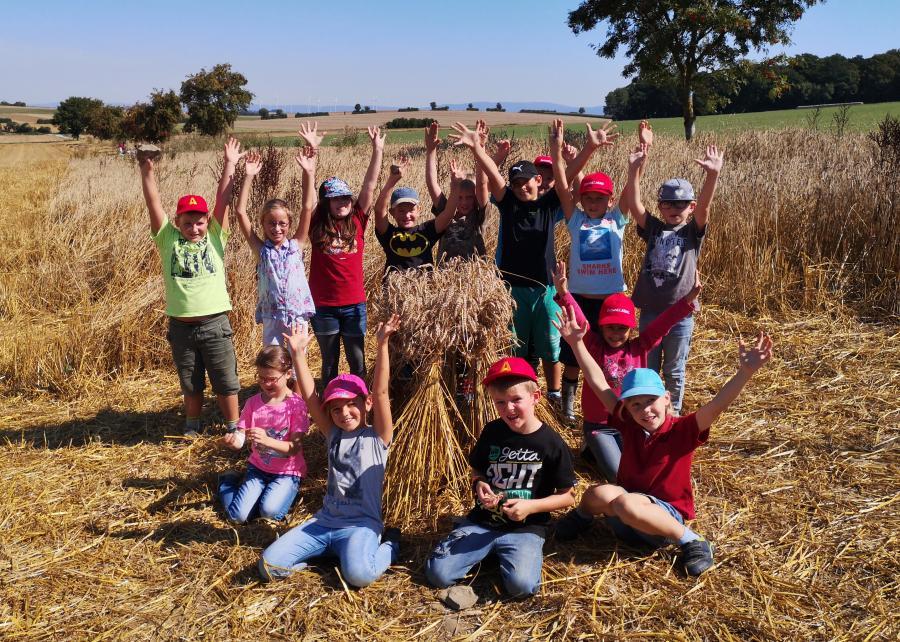 Getreide ernten 2016