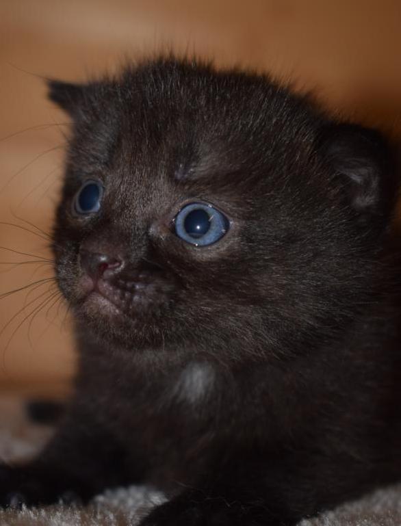 somalia kitten