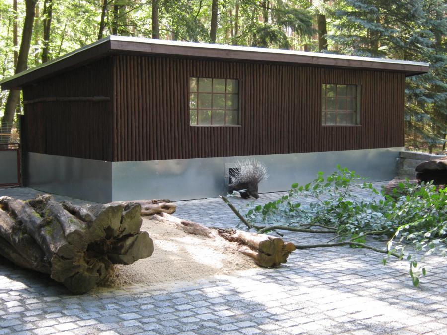 Stachelschwein A