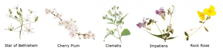 Fünf Bachblüten
