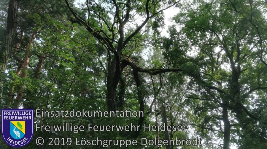 Einsatz 108/2019 | Ast droht zu stürzen | Dolgenbrodt Am Seekorso | 21.07.2019