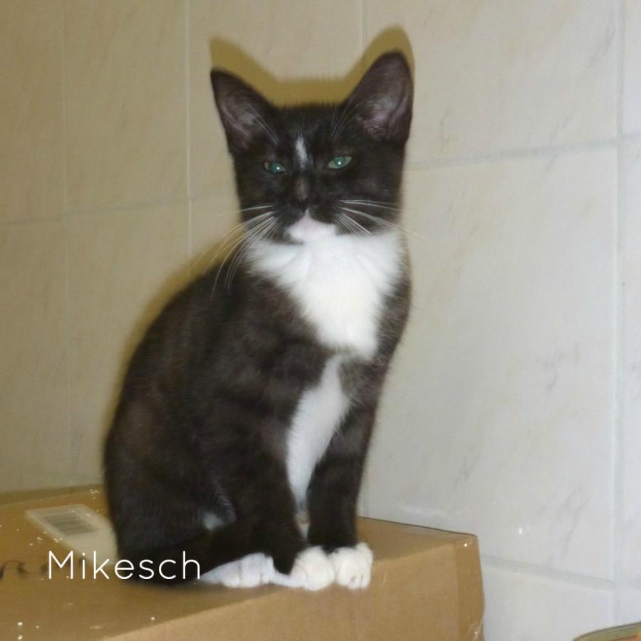 Mikesch