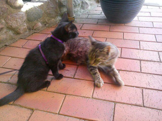Lisa und Kitten